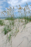 Beach sand dunes Royalty Free Stock Photography
