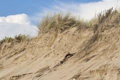 Beach sand dunes against sky Stock Photos