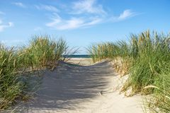 Beach with sand dunes and marram grass. stock images