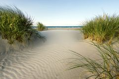 Beach with sand dunes and marram grass in soft evening sunset light. Royalty Free Stock Photo
