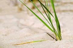 Beach with sand dunes and marram grass in soft evening sunset light. stock photography