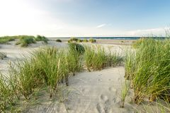 Beach with sand dunes and marram grass in soft evening sunset light. Royalty Free Stock Image
