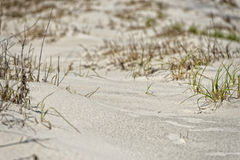 Beach sand dunes Stock Photos