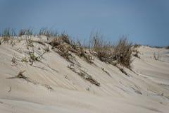 Beach sand dunes Stock Images