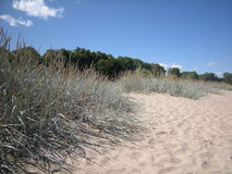 Beach. Sand and grass Royalty Free Stock Photos