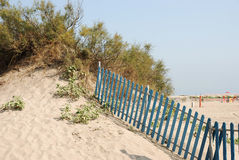 Beach sand hill with bushes. Typical beach scene: sand dune with bushes, plants and fence Royalty Free Stock Images