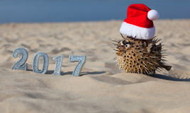 On the beach, in the sand are the numbers of new 2017 and lies next to fugu fish, which is wearing a Santa Claus hat. Royalty Free Stock Image
