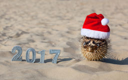 On the beach, in the sand are the numbers of new 2017 and lies next to fugu fish, which is wearing a Santa Claus hat. Royalty Free Stock Photo