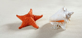 Beach sand pearl necklace shell starfish summer. Beach sand with starfish and  pearl necklace shell like a summer vacation symbol Royalty Free Stock Photos