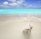 Beach sand pearl necklace shell summer vacation Stock Image