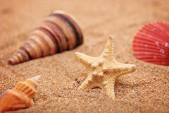 A beach sand with sea shell and star fis Royalty Free Stock Images