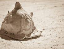 Beach Sand Seashell Sepia Royalty Free Stock Image