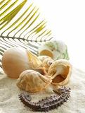 Beach sand and seashells,  concept  vacation Stock Photo
