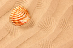 Beach sand with shell. Close up Stock Images