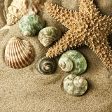 Beach sand, shell and starfish. Golden colors Stock Photography