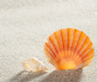 Beach sand shell tropical perfect summer vacation. Beach shell in white sand like a summer vacation background Royalty Free Stock Photos