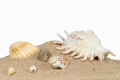 Beach with sand and shells Royalty Free Stock Image
