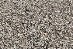Beach sand with shells Stock Image