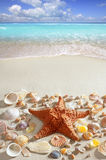 Beach sand starfish caribbean tropical sea Stock Photography
