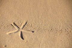 Beach sand with starfish printed Stock Photography