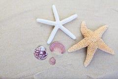 Beach sand. Starfish and shells on the beach sand background