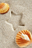 Beach sand summer clam shell star print vacation Royalty Free Stock Photo