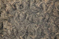 Beach sand texture Fuerteventura Canary Islands Royalty Free Stock Photography