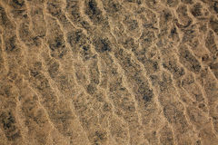 Beach sand texture Fuerteventura Canary Islands Royalty Free Stock Image