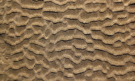 Beach sand waves pattern texture brown wet Stock Photography