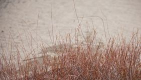 Beach Sand With Willows. In Foreground Winter Scene Royalty Free Stock Images