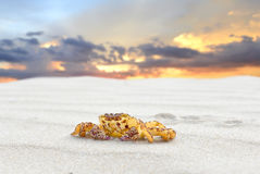 Beach sand and the yellow crab Stock Photos