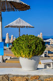 Beach. Sandy Zografou beach with parasols and sunbeds and fresh basil in white flowerpot on low stone wall in foreground,  Chalkidiki, Sithonia, Greece Stock Photography