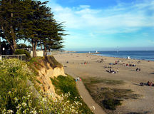 Beach at Santa Cruz. Wide beach at the Pacific in Santa Cruz California. A cliff on the left side with cypress trees and wild flowers. Blue sky and white clouds Royalty Free Stock Photography