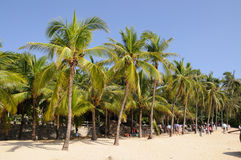 Beach in sanya. Royalty Free Stock Photos