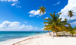 Beach in Saona Dominican Republic Stock Photography