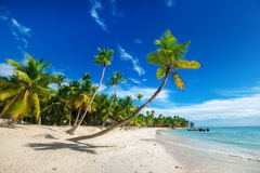 Beach on Saona Island in the Caribbean Stock Photos