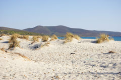Beach in Sardinia Stock Image