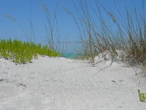 Beach Scene. Grassy beach dunes stock photography
