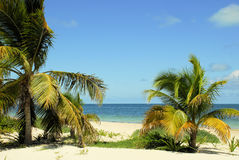 Beach Scene. With bright blue sky and trees Royalty Free Stock Photography