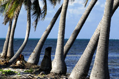 Beach scene in belize. Scenic image of belize central america Royalty Free Stock Photo