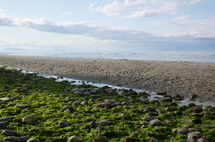 Beach scene with layers. Of sea weed, rocks, water, sand, and sea, taken on Qualicum beach, Vancouver Island Royalty Free Stock Photos