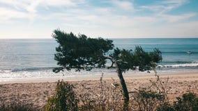 Beach scene, Los Angeles, California, USA. Malibu Beach is one of the most popular beaches in California stock footage