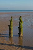Beach Scene, near Silloth, Cumbria, Lake District. Wooden beach posts, near Silloth Cumbria, Lake District, England. Coast of Scotland in the distance Royalty Free Stock Photos