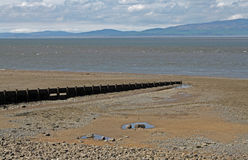 Beach Scene, near Silloth, Cumbria, Lake District. Wooden beach posts, near Silloth Cumbria, Lake District, England. Coast of Scotland in the distance Royalty Free Stock Photography