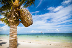 Beach scene with palm tree holding a woven basket Royalty Free Stock Photography