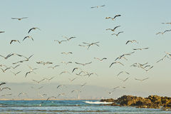 Beach scene with Seagulls and birds at sunrise Stock Photo