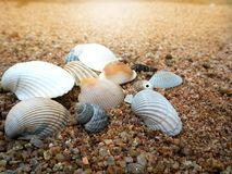 Beach scene in summer vacation holiday with sand. Sea shells, Beach scene in summer vacation holiday with sand Royalty Free Stock Image