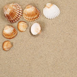 Beach scene in summer vacation with sand, sea shells and copyspa Royalty Free Stock Image