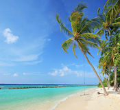 Beach scene with a swing on a palm tree royalty free stock photo