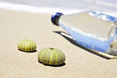 Beach scene with two dead sea urchin shells Royalty Free Stock Photography